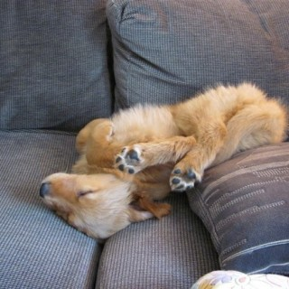 sleeping-dogs-29.jpg